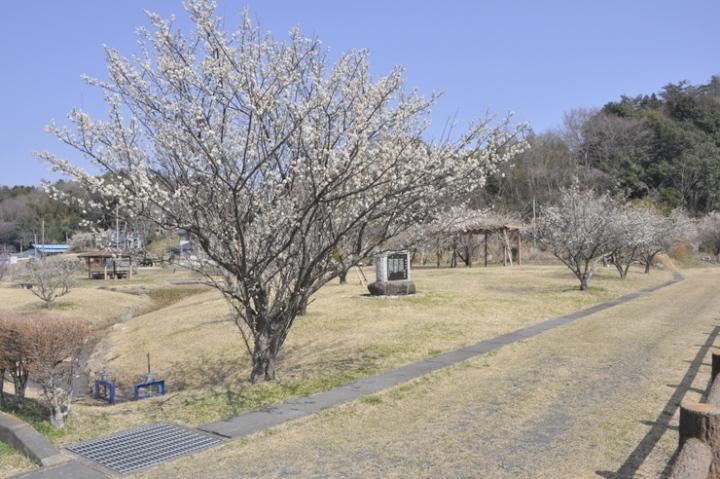 親沢池親水公園3月