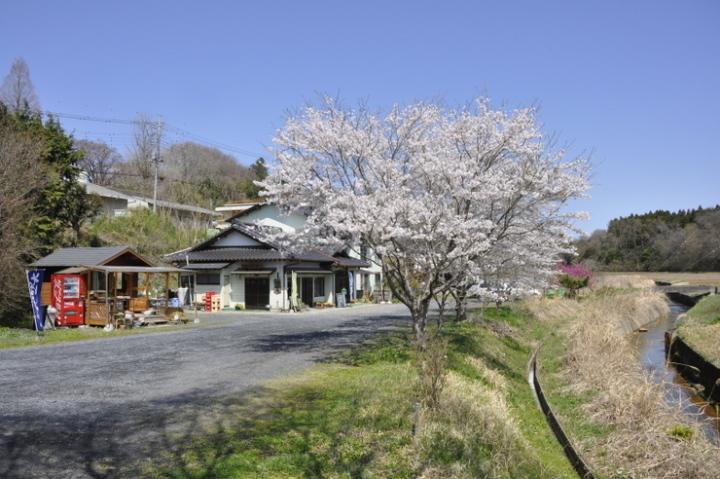 登喜和家の桜