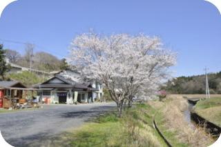 登喜和家桜