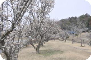 親沢池親水公園