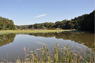 親沢池親水公園写真